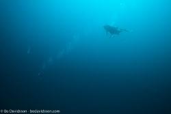 BD-141023-Nusa-Penida-6071-Homo-sapiens.-Linnaeus.-1758-[Diver].jpg